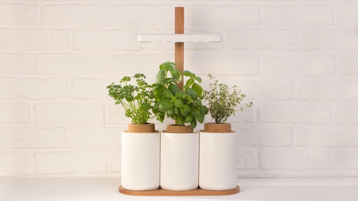 Faire Pousser Persil En Interieur lilo - système intégré pour faire pousser des plantes